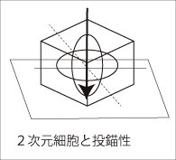 dimension2b.jpg